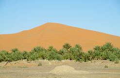 Sand dune behind the palm trees Stock Photos