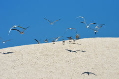Sand dune and birds Stock Image