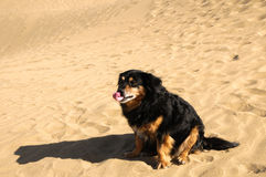 Sand Dune Desert and Dog Royalty Free Stock Image