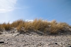 Sand dune with dry marram grass Ammophila arenaria against a b stock image
