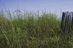 Sand dune, dune grass, and blue sky on Cape May on Royalty Free Stock Images