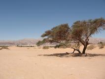 Sand dune. S in the dry summer desert Royalty Free Stock Image