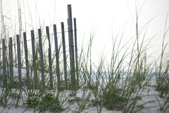 Sand Dune Fence with Sea Oats Royalty Free Stock Photos