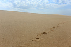 Sand dune footprints Stock Images