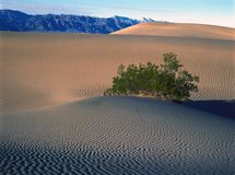 Beautiful Sand Dune Formations in Death Valley royalty free stock photo