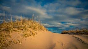Sand dune grass Stock Photos
