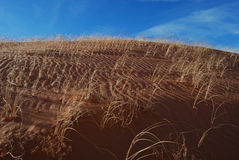 Sand Dune Grass Ripples Royalty Free Stock Photography