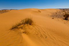 Sand dune with grass Royalty Free Stock Images