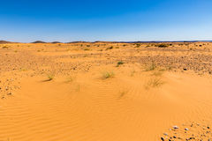 Sand dune with grass Stock Photography