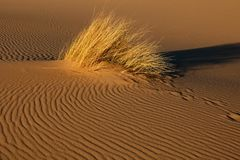 Sand dune with grass - South Africa stock images
