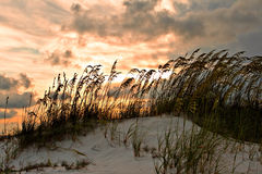 Sand dune and grasses Royalty Free Stock Photos