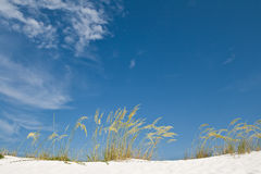 Sand dune and grasses Stock Image