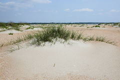 Sand dune with grasses at the beach Stock Photo