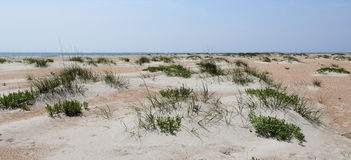Sand dune with grasses at the beach Stock Photos
