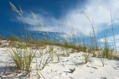 Sand dune and grasses under pretty blue sky Stock Images