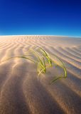 Sand dune growth Royalty Free Stock Photo