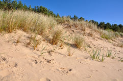 Sand dune. Jurmala, Baltic Sea, Latvia. Royalty Free Stock Photo