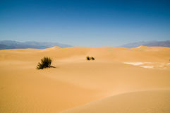 Sand dune landscape Death Valley National Park Stock Photos