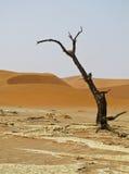 Sand Dune in Namib-Nauktuft National Park Namibia Stock Photography