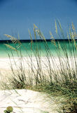 Sand Dune-Naples, Florida Royalty Free Stock Photos