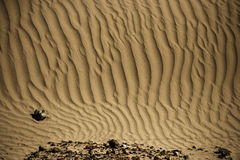 Sand Dune in Nubra Valley Stock Photos