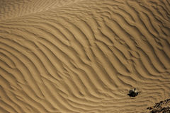 Sand Dune in Nubra Valley Royalty Free Stock Photo
