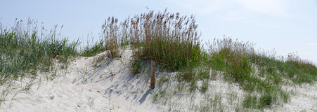 Sand dune partly overgrown Stock Images