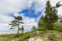 Sand Dune With Pine Trees Next to Lake Huron. Sand dune with Red Pine Trees next to Lake Huron - Pinery Provincial Park, Ontario, Canada Royalty Free Stock Photography