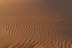 Sand Dune Ripples Royalty Free Stock Photography