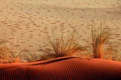 Sand Dune with Ripples and Fairy Circles. Red Sand Dune with little Ripples and Fairy Circles in the background. Picture taken from Elim Dune in the Namib Desert Stock Images