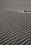 Sand dune ripples and a green bush Stock Photo