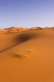 Sand dune. In the Sahara desert stock image