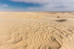 Sand dune of Sahara desert in Tunisia Royalty Free Stock Images