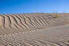 Sand dune with same marram grass Royalty Free Stock Photos