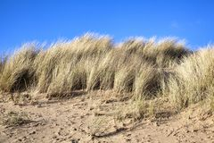 Sand dune. At the beach of Burry Port Carmarthenshire Wales UK royalty free stock images
