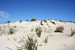 Sand Dune and Sky. A clean white sand dune in front of a clear blue sky Stock Photos