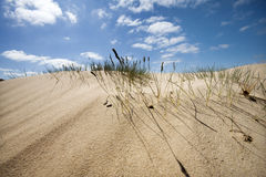 Sand dune with some grass Stock Photos