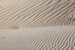 Sand dune with some marram grass. A rippled sand dune with some marram grass Royalty Free Stock Images