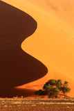 Sand Dune in Sossusvlei. Beautifully shaped sand dune with acacia tree. Picture was taken in the early morning in Sossusvlei National Park, Namibia stock images