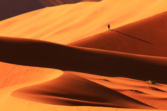 Sand Dune in Sossusvlei. Man walking lonely uphill on the crest of a sand dune, Picture was taken in Sossusvlei National Park, Namibia stock photo
