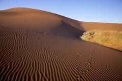 A sand dune Sossusvlei, Namibia,Africa Stock Image