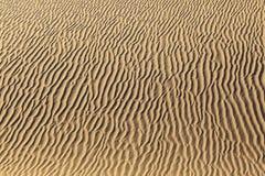 Sand dune in sunrise in the desert Stock Images