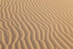 Sand dune in sunrise in the sonoran desert. Beautiful sand dune in sunrise in the sonoran desert stock images
