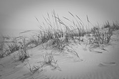Sand dune with tall grass. Royalty Free Stock Image