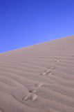 Sand Dune With Tracks. Animal tracks up a sand dune Stock Photos