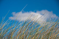 A sand dune. Sand dune under a blue sky Stock Photography