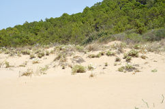 Sand dune vegetation Royalty Free Stock Images