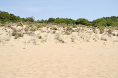 Sand dune vegetation Stock Photo