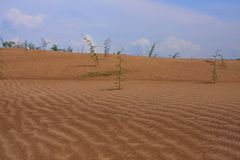 Sand dune in Vietnam Royalty Free Stock Photography