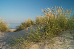 Sand dune with view to ocean. Sand dune with beachgrass (Ammophila arenaria) and view to ocean near Blokhus, Denmark Royalty Free Stock Images